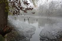 Červený rybník byl vypuštěn poprvé po čtyřiceti letech