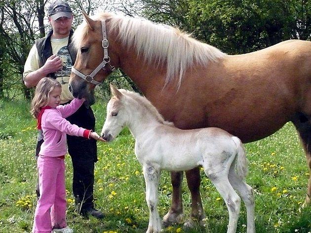 Předseda fotbalového Slovanu Velvary David Vedral má kromě rodiny a fotbalu ještě jednu velkou lásku - zvířata.