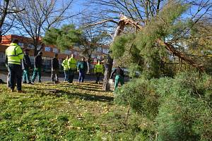 Vichřice udeřila i na Kladensku, hasiči likvidovali spadané stromy.