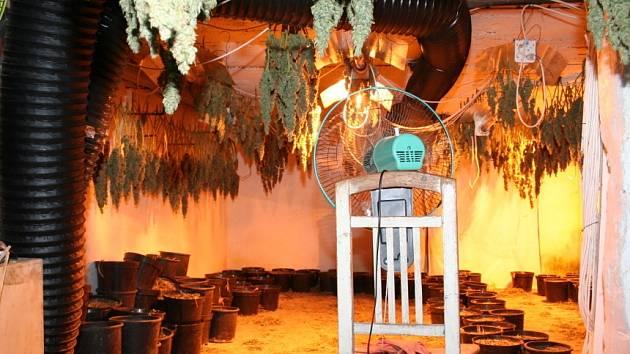Odhalená pěstírna marihuany v Žilině
