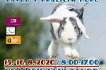 Závody králičího hopu budou ve Velkém Přítočně.
