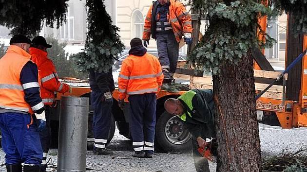 Usazení vánočního stromu na náměstí Starosty Pavla v Kladně nebylo jednoduché. Nakonec se zdařilo a stříbrný smrk bude město zdobit až do začátku příštího roku.