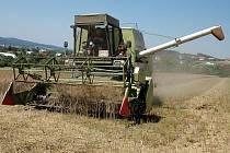 Většina obilovin je už na Kladensku a Slánsku sklizena. Zbývá ještě pokosit některé plochy s jarními ječmeny a pšenicí.