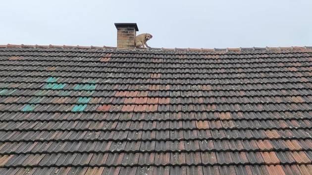 Záchrana psa ze střechy.
