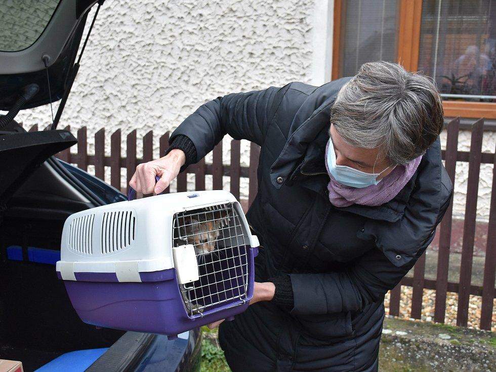 Opuštěná zvířata na místě tragédie v Líském.
