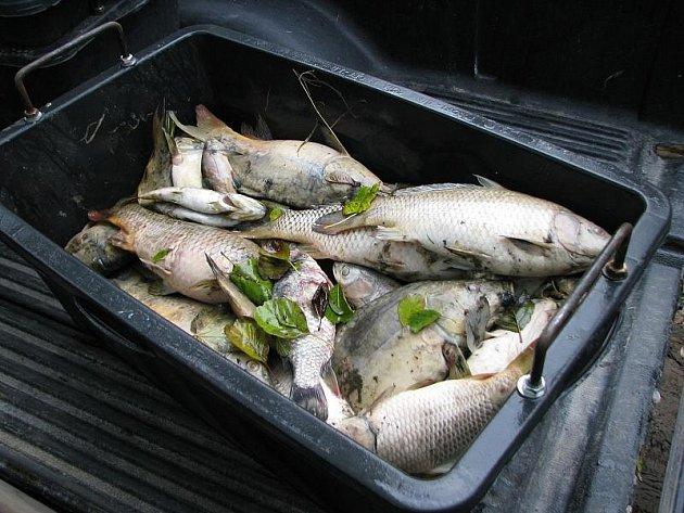 Ekologická havárie na rybníku ve Slaném-Kvíci způsobila úhyn ryb