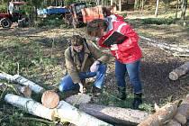Nepovolené kácení stromů ve Třebichovicích. Jednatel společnosti RP Real Josef Bešta tvrdí, že vše má na svědomí neznámý pachatel.