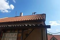 Pomoc koze na střeše, Smečno.