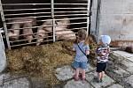 Den otevřených dveří a polní den na farmě.
