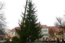 Vánoční smrk věnoval letos Slaňákům soukromý majitel
