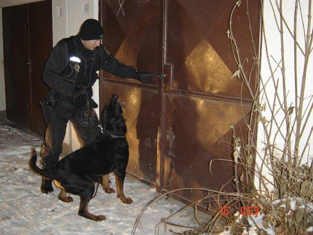 Při kontrolách chatek v zahrádkářských koloniích jsou strážníkům velmi nápomocni služební psi.