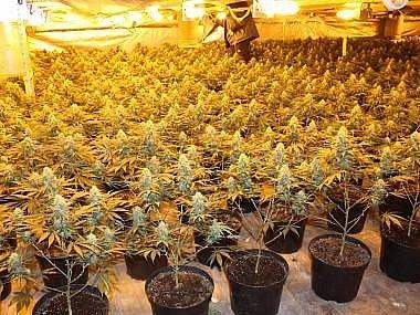 Nelegální pěstírna marihuany
