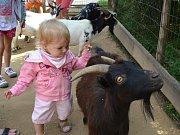 TĚŽKO se dalo děti odtrhnout od malých přítulných koziček.