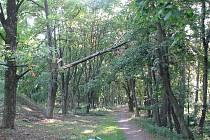Polámané stromy po vichřici ve Slaném ohrožují lidi v lesoparku