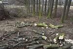 Díky všímavosti lidí se podařilo v Makotřasech zachránit sto padesát stromů.