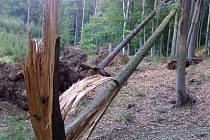 Desítky spadaných stromů po sobě zanechal lokální vír v bílichovnských lesích