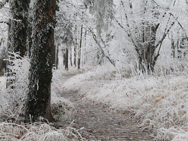 Děti našly cestou do školy mrtvolu v lesoparku Háje ve Slaném u nemocnice