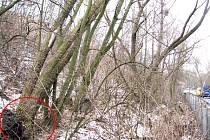 Před časem si jeden z obyvatel Libušína postěžoval, že neví na koho se má kvůli nebezpečnému stromu obrátit. Tato problematika se týká především příslušných odborů životního prostředí.
