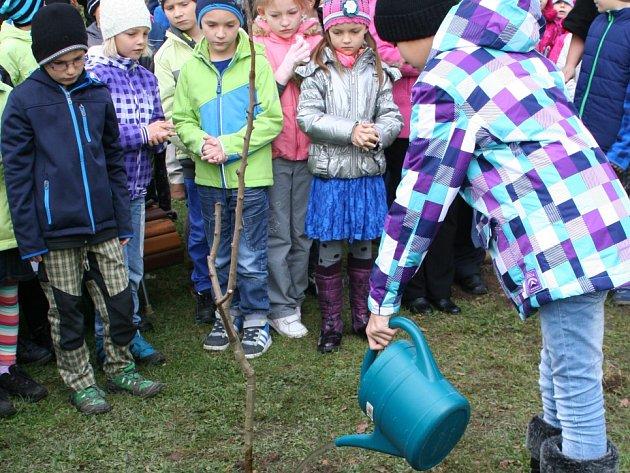 Dceřiný strom Lidické hrušně zasadili ve čtvrtek děti v Lánech před školou.