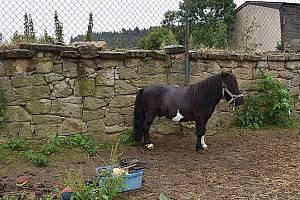 Koně v Žilině.