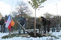 LÍPU SPOLEČNĚ ZASADILI kladenský primátor Dan Jiránek, Ladislav Švejda, kmotr akce a velitel 43. výsadkové praporu, a architekt František  Műller.