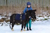Koňská vyjížďka v Tuchlovicích.