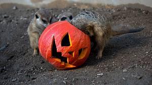 Halloween v Zooparku Zájezd
