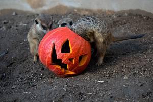 Halloween v Zooparku Zájezd.