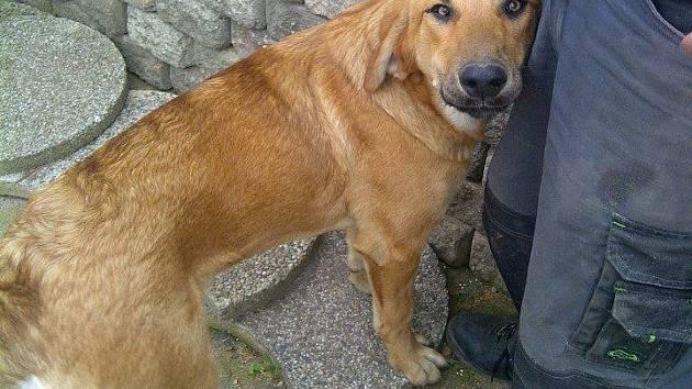 Pomozte najít ztraceného psa jménem Bejlís