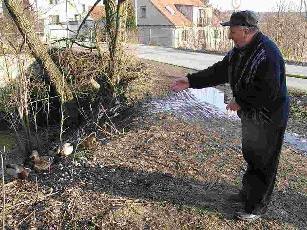 Manželé Josef a Lenka Šmídovi z Doks si hejno místních kachen tak oblíbili, že je chodí krmit téměř každý den.