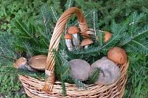 Srdce houbařů plesají, hub je opravdu dost.