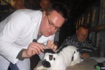 Kladenští chovatelé o víkendu uspořádali okresní soutěžní výstavu králíků, holubů a drůbeže.