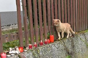 Opuštěné kočky i s koťaty po tragédii v Líském.