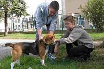 Připnout psa na vodítko se v ulicích města vyplatí. Nejen, že nevyfasujete pokutu, ale chráníte tím životy ostatních lidí kolem sebe a zvířat samotných. Rozohněný pes je nebezpečný stejně tak  jako odjištěná zbraň.