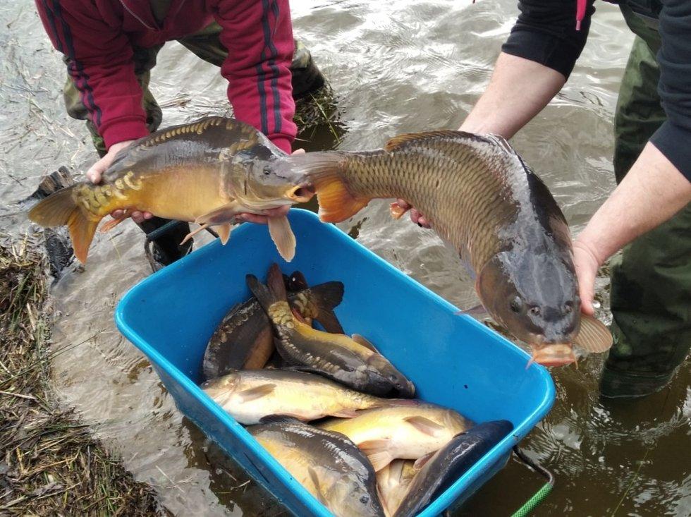 Násada ryb byla do Novasu dovezena ze sádek Červený Hrádek u Sedlčan.