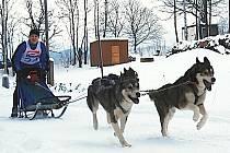 Ondra Stejskal na trati závodů psích spřežení v Janovičkách u Broumova.