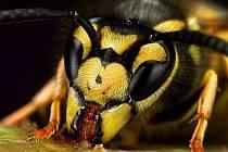 Svět hmyzu.