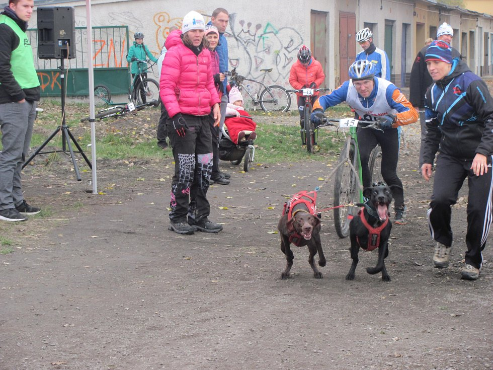 První listopadový víkend patřil ve Stochově psím spřežením.