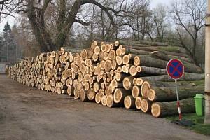 Staré stromy musely být prý pokáceny hlavně kvůli bezpečí zahrádkářů. Podle odborníků jsou to krátkověké dřeviny, které už mají svoje zkrátka odžito.
