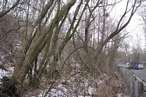 V případě, že objevíte nějaký potenciálně nebezpečný strom, kontaktujte nejbližší odbor životního prostředí.