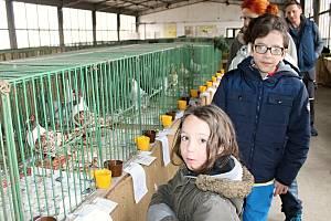 Velvarští chovatelé vystavovali. Za rok oslaví stovku.