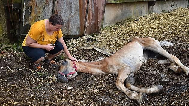 Veterinářka Petra Březinová uspává zuboženou kobylu Anetku.