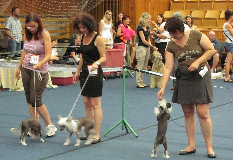 Krajská, klubové a speciální výstavy psů ve sportovní hale v Kladně.