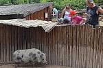 Slavnostní brunch v Zooparku Zájezd