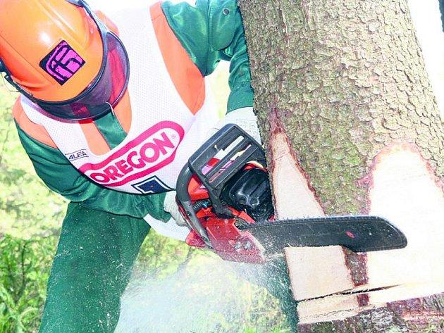 Na Lapáku se bude kácet nejdříve až někdy na podzim. Pokud přece jen někdo potká člověka s pilou, jedná se vždy prý jen o jednotlivou probírku dřevin.
