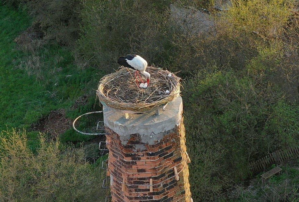 Hnízdo čápů v Kačici.