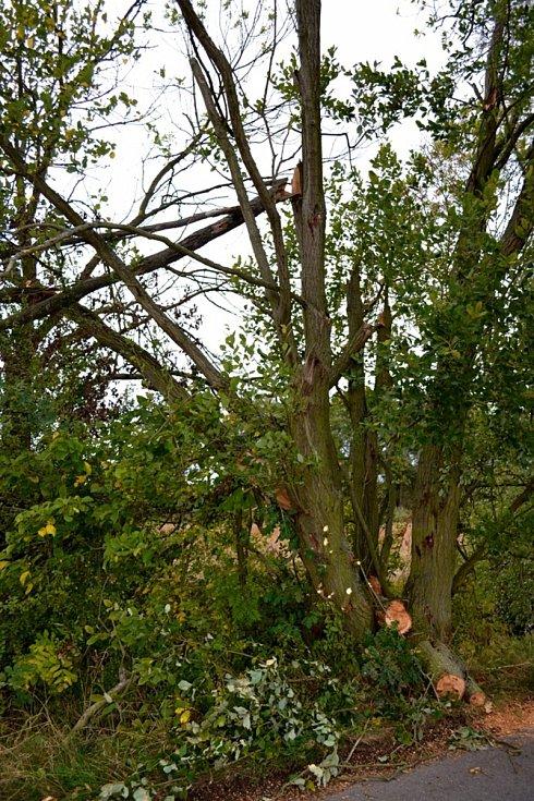 Snímky polámaných stromů z Kladenska.