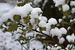 Únorový sníh aneb Jak bude v březnu.
