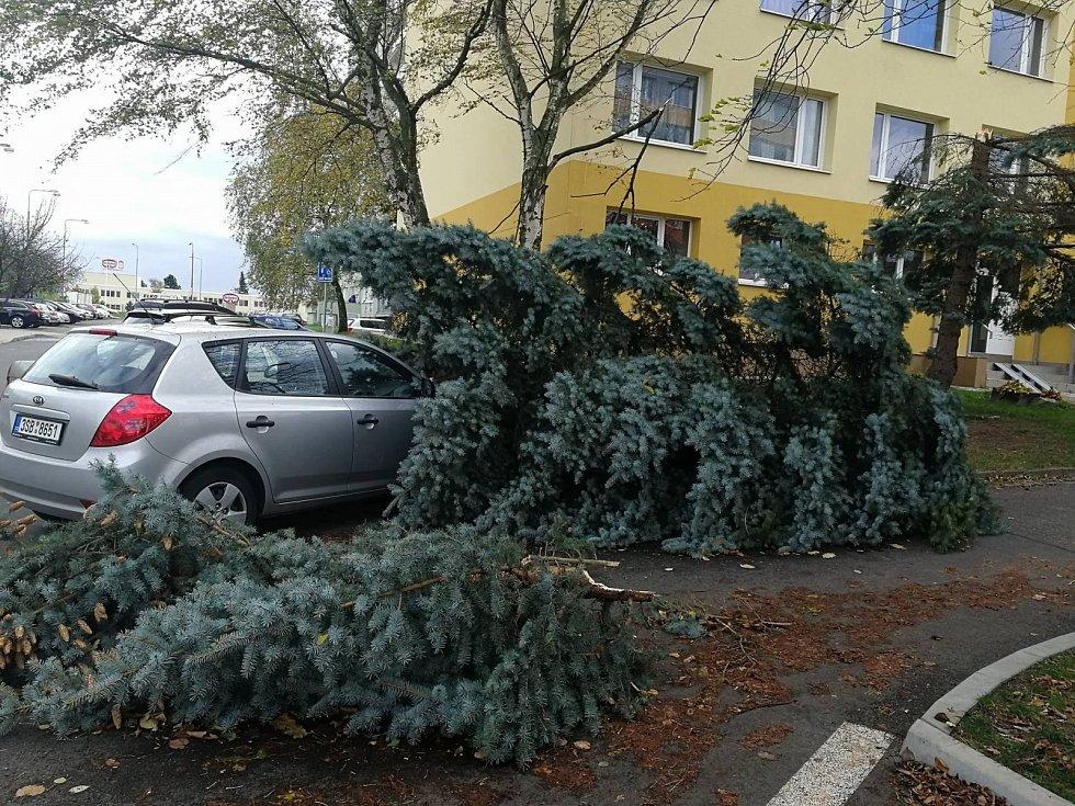 Spadlý strom v Norské ulici v Kladně.