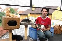 Kristýna Kacálková s kočkami ve vrbičanském útulku.